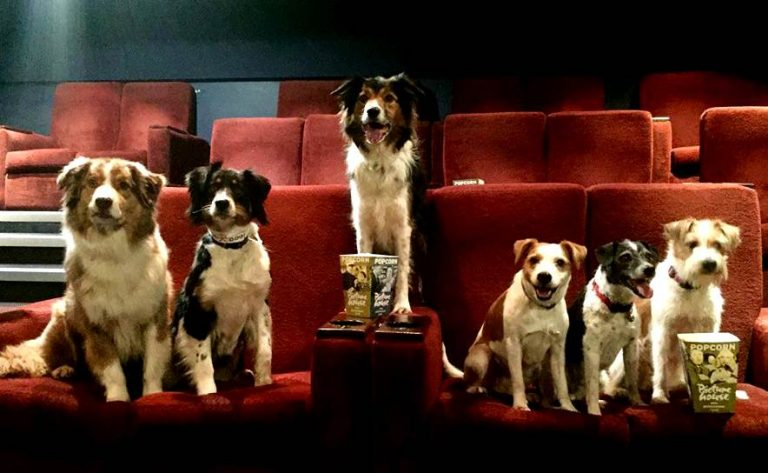 dogs in a row sitting in a cinema